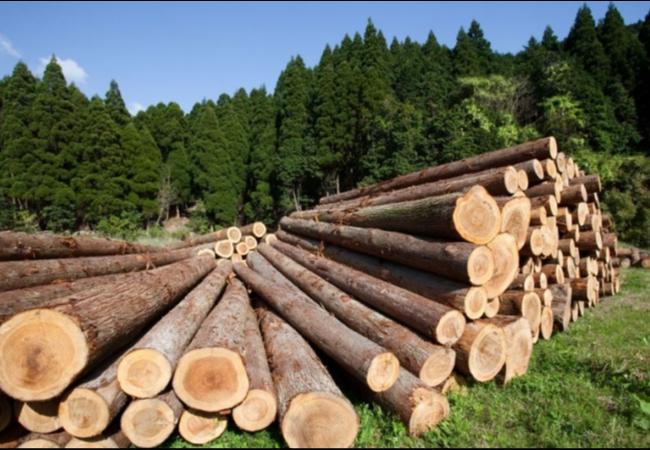 Предоставление леса на корню, пиломатериала, домокомплекта для индивидуального строительства