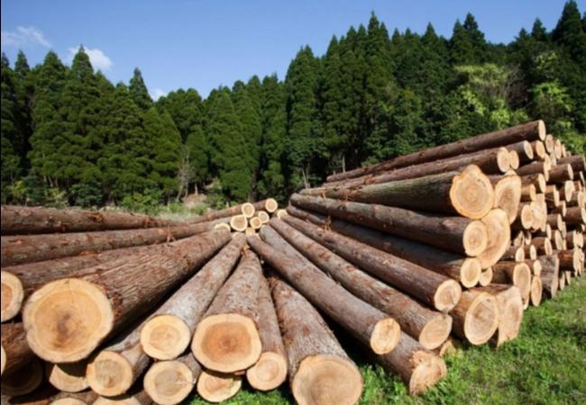 Информационное сообщение №46 (К) о продаже древесины