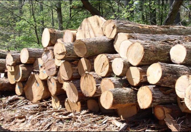 Информационное сообщение №47 (К) о продаже древесины