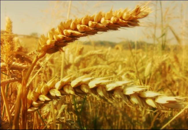 Уважаемые труженики сельского хозяйства и перерабатывающей промышленности!