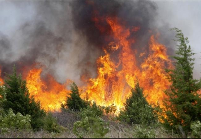 Предупреждение о чрезвычайной пожарной опасности (5-й класс горимости леса).